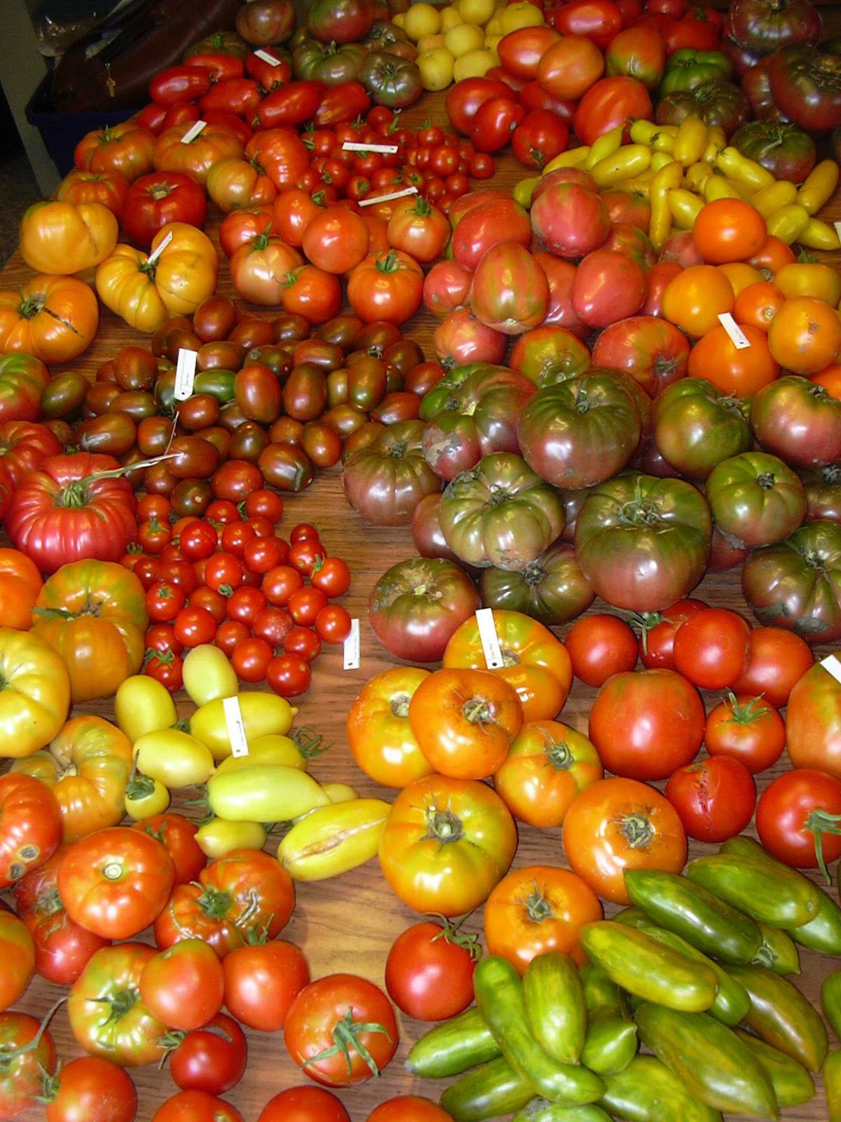 галерея-помидоров