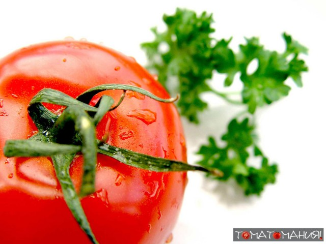 Красивый мокрый помидор
