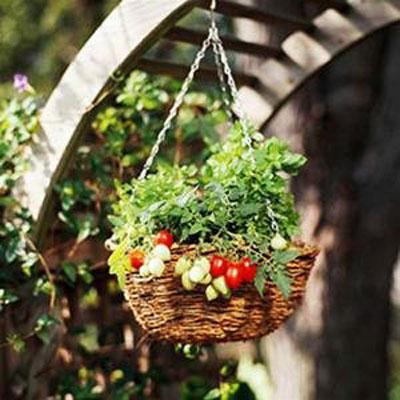 Томаты черри выращивание в подвесной корзинке