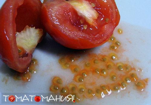 подготовка семян томатов +к посеву