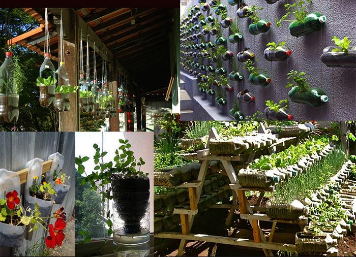 Как выращивать зелень дома?