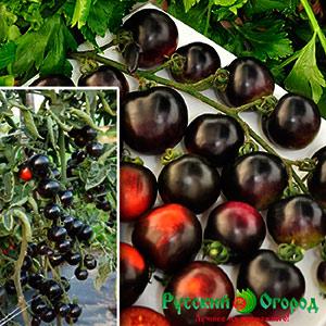 томат черная гроздь гибрид семена