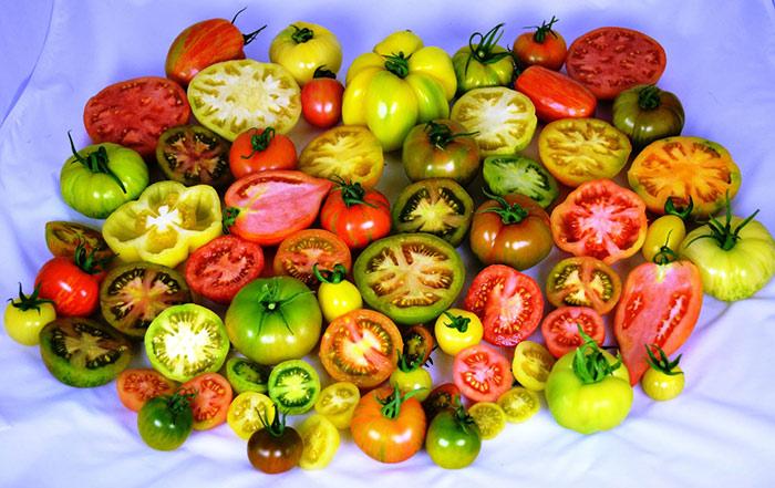 отзывы-помидоры