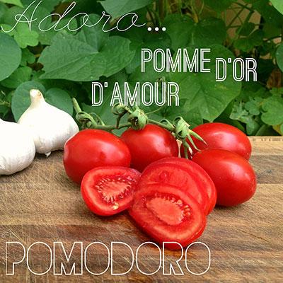 Происхождение слова помидор