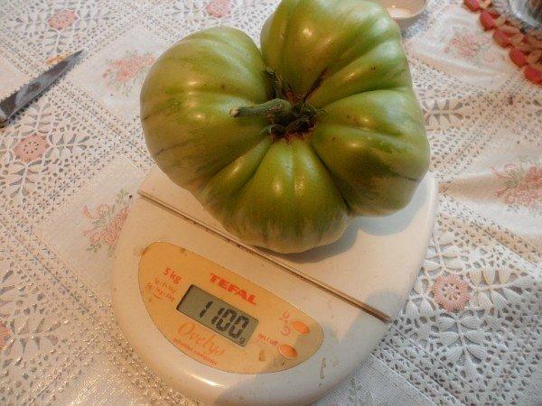 помидоры без полива казарин