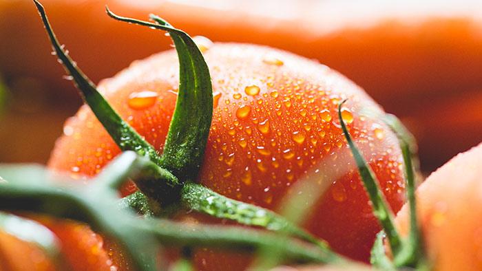 лунный календарь посадки помидоров