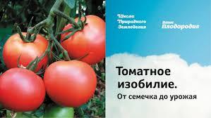 видео-советы-рассада-томатов
