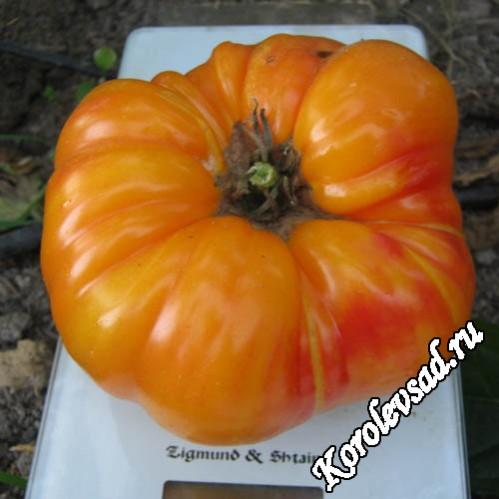 Немецкий полосатый - крупнопложный салатный сорт томатов