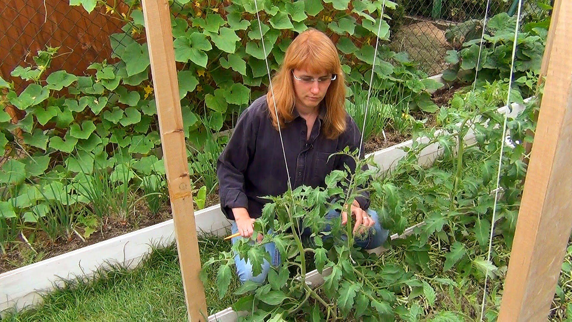 Усадьба Багиры подвязка томатов