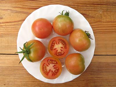 сорт томата зимний маллоркан хранение