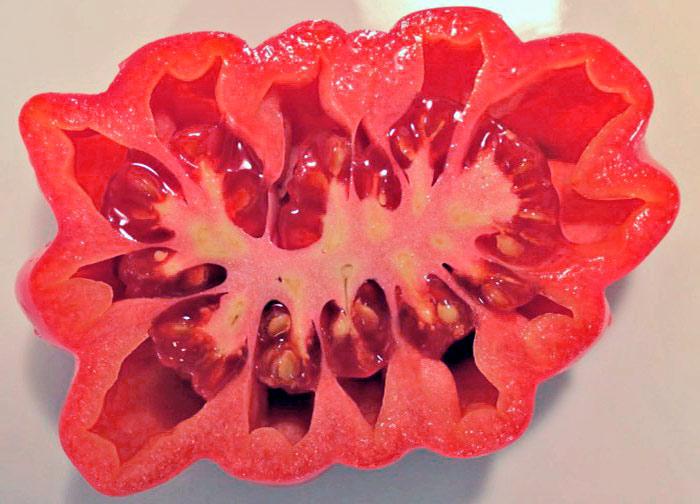 сорт-томата-розовый-аккордеон